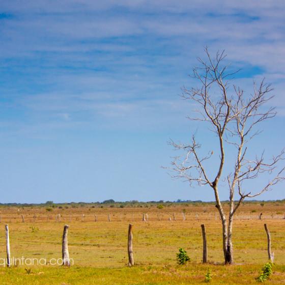 En una finca en Casanare, fotografía documental