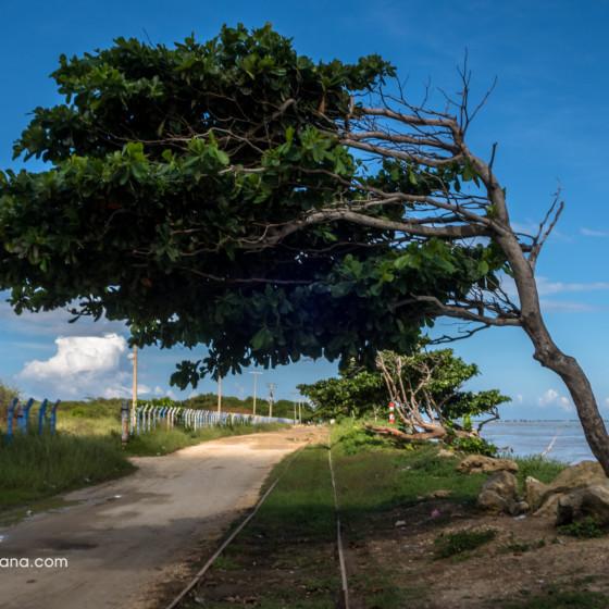 Árbol que se lleva el viento