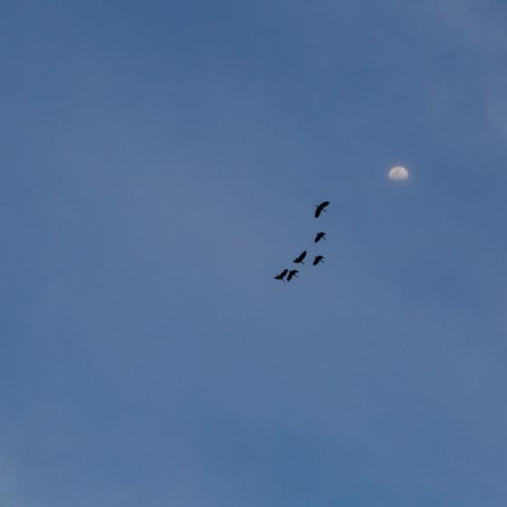 Volando alto